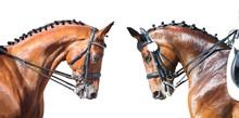 Equestrian Sport Portrait - Dr...