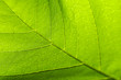 Abstract texture of the leaves.Created by natural.