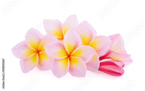 Foto op Canvas Frangipani frangipani flowers isolated on white background