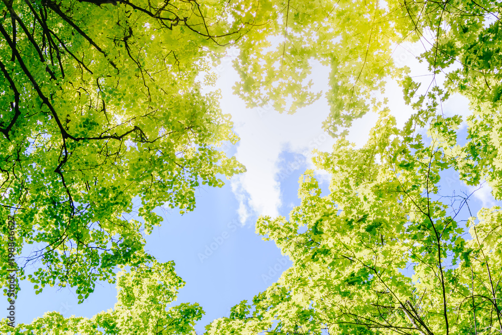 Green leaves of trees on a blue sky