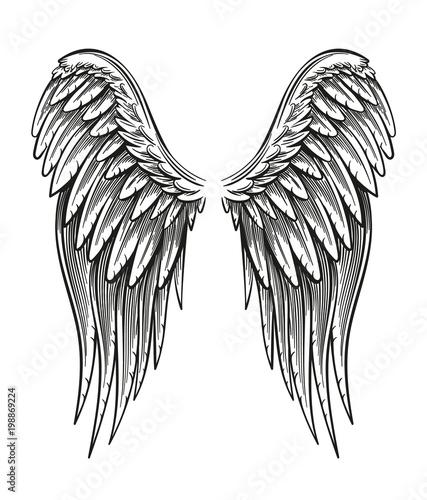 Fényképezés  Hand Drawn Wings