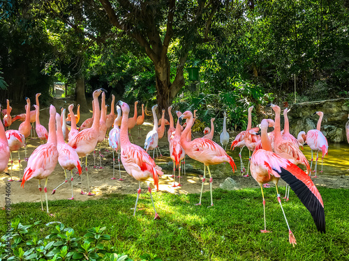 Foto op Aluminium Flamingo Group of pink flamingos among green trees. Animal world