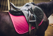 Saddle With Stirrups On A Back Of A Sport Horse