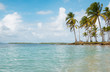 tropical island landscape - ocean palm trees and blue sky