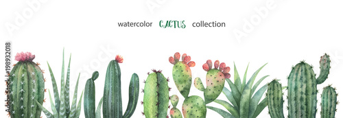Fototapeta Watercolor vector banner of cacti and succulent plants isolated on white background
