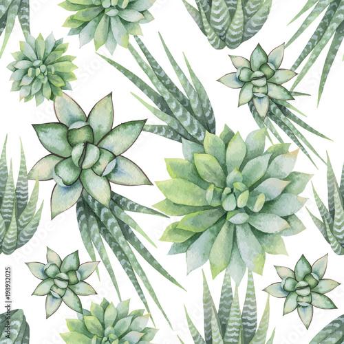 Akwarela wektor wzór kaktusów i sukulentów na białym tle.
