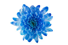 Blue  Flower With Petals And Heart On White Isolated Background. Pattern For The Designer.