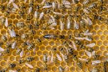 The Queen Bee Swarm - Selectiv...
