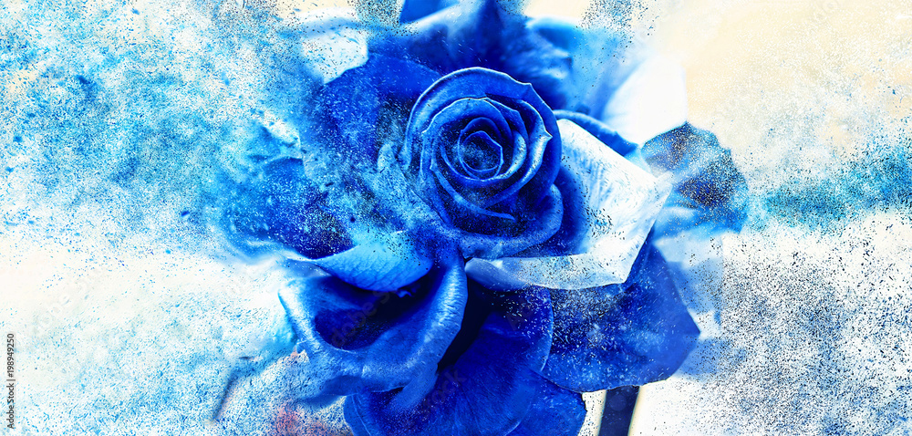 Scattering blue rose