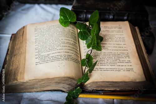 Fotografie, Obraz  libro y hojas