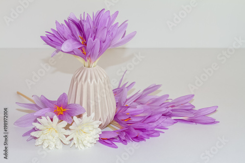 Pink purple flowers on a vase fresh natural crocus bouquet a pink purple flowers on a vase fresh natural crocus bouquet a spring mightylinksfo