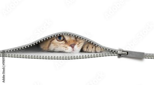 smieszny-kot-pomiedzy-suwakiem-biale-tlo-kociak