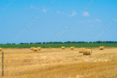 Fotografia, Obraz  поле тюк сена солома сбор жатва пшеница зерно