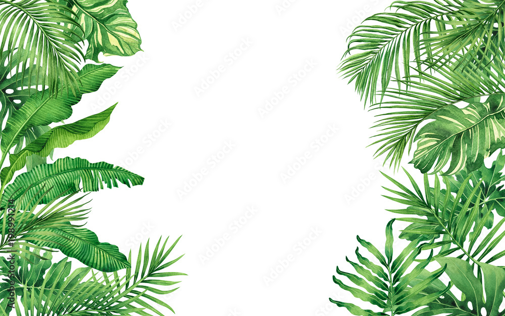 Fototapety, obrazy: Watercolor painting frame tropical leaves coconut,palm,green leaf isolated on white background.Watercolor hand drawn illustration tropical exotic leaf for wallpaper,backdrop,card,vintage Hawaii style.