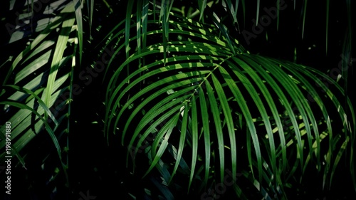 green palm leaf wall Fotobehang
