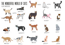 Breed Cats Brochure Cards Set. Animal Traditional Template Of Flyear, Magazines, Posters, Book Cover, Banners. Kitten Invitation Concept Background. Layout Quality Modern Pages