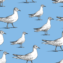 Pattern Of The Walking Seagulls