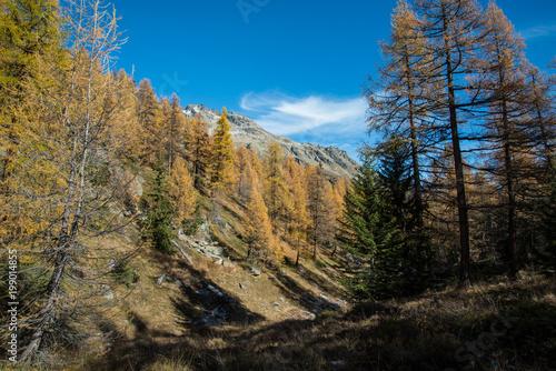 Foto op Aluminium Grijze traf. Lötschental im Herbst