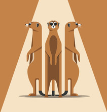 The Family Of Meerkats Is Basking In The Sun