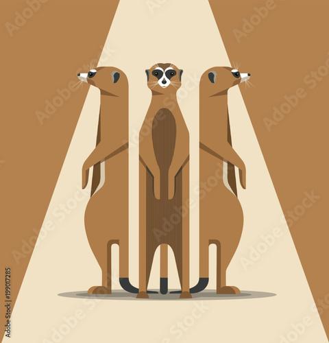 Obraz na plátne The family of meerkats is basking in the sun