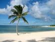 Paradise Palm 3