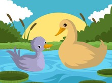 Ugly Duckling Tale