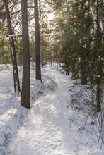 En Liten Skogsstig Fotad På Vintern