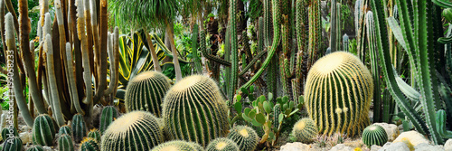 Panorama of various kinds of cacti