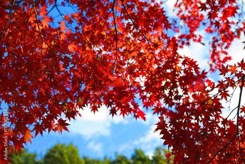 Keuken foto achterwand Rood paars 秋の山の公園の風景7