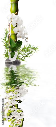 Valokuva bambou ventre de Bouddha et orchidée avec reflets
