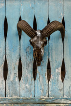 The Skull Of An Animal With Large Horns Mounted On A Worn-out Wooden Fence