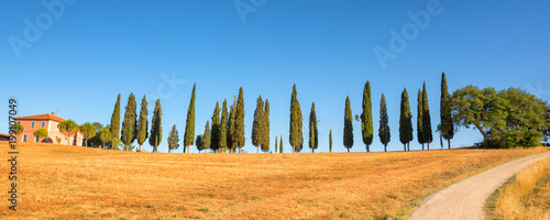 Poster Olive Beautiful typical panorama landscape of Val d'Orcia in Tuscany at sunset, Italy