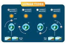 Lunar And Solar Tides Vector I...