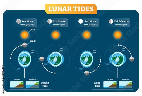 Stampa su Tela Lunar and Solar tides vector illustration diagram poster