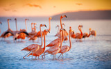 pink flamingos in sun