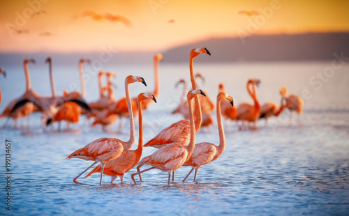Photo sur Aluminium Flamingo pink flamingos in sun