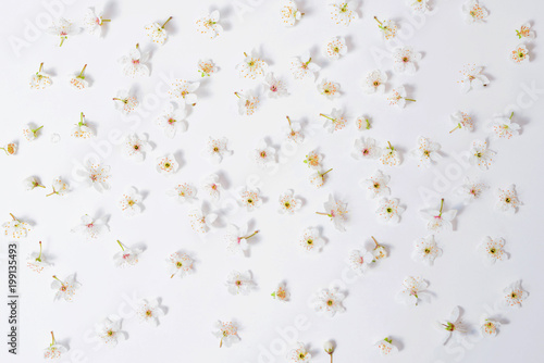 Fototapeta white flowers arranged on a white background like pattern obraz na płótnie