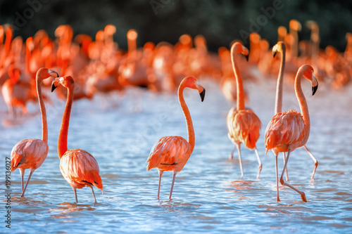 ponk flamingos with pink backgroiund