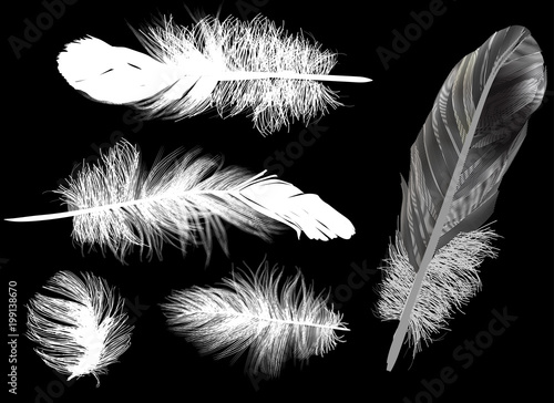 five white feathers set on dark background