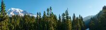 Forest And Mount Rainier At Mount Rainier National Park, Washington State, USA