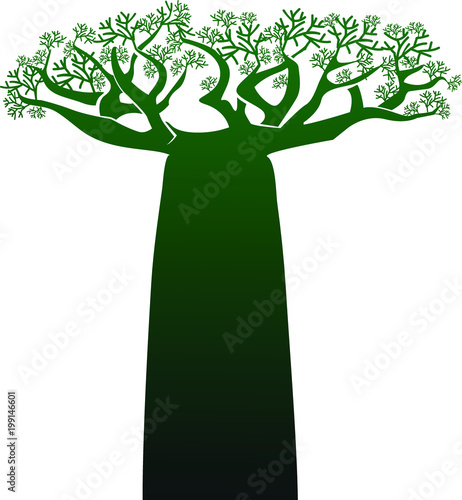Fotomural African baobab tree on a transparent background. Vector.