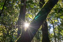 Sun Star Light Behind Branch Tree Forest
