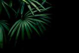 green palm leaf wall - 199164491