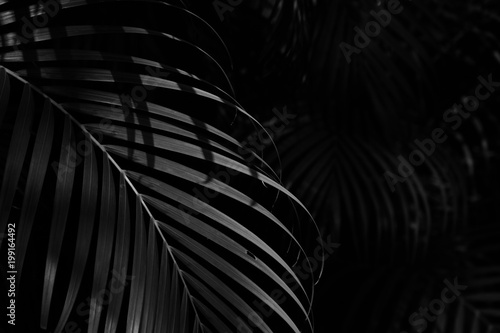 palm leaf in the forest - monochrome Poster