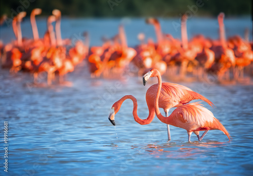 Spoed Foto op Canvas Flamingo Two flamingos in water