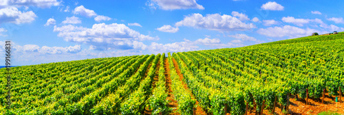 Photo sur Toile Vignoble Vineyards of Burgundy - France