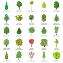 Tree Types Icons Set, Isometric Style