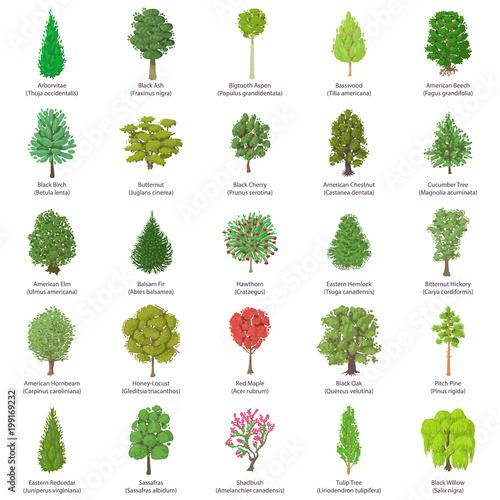 Fotografía  Tree types icons set, isometric style