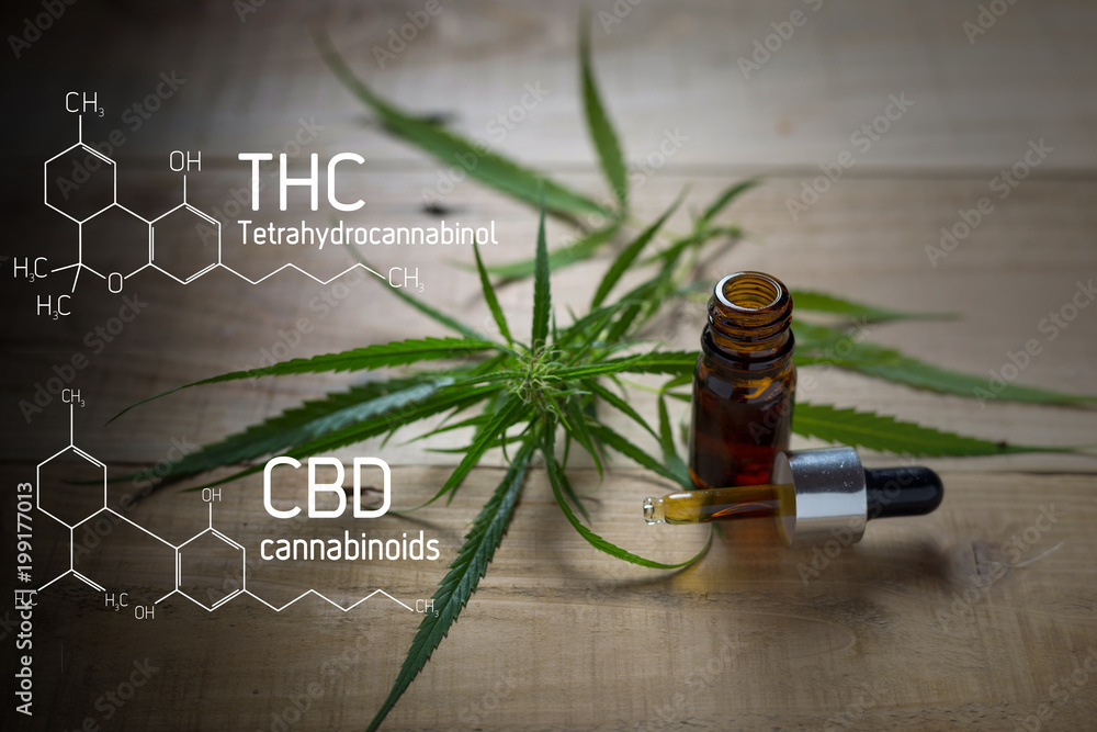Fototapety, obrazy: Medicinal cannabis with extract oil in a bottle of  Formula CBD THC
