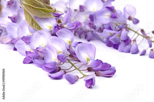 Recess Fitting Orchid Fleur sde Glycine
